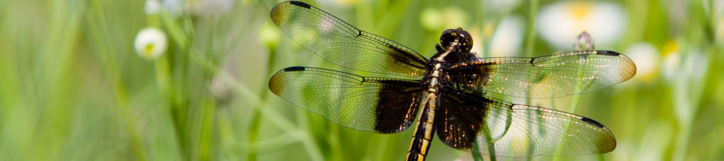 Dragonfly in Al Sabo Land Preserve, by Jansen Photography